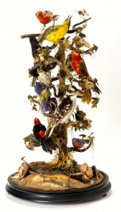 Victorian_Bird_Taxidermy_DSC0151